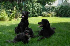 Buffered Aspirin for Dogs - Vetinfo.com