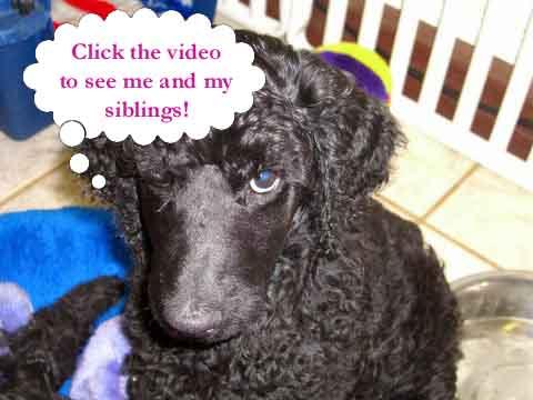 http://www.parrishill.com/sitebuildercontent/sitebuilderpictures/click-the-video-puppy-talk.jpg