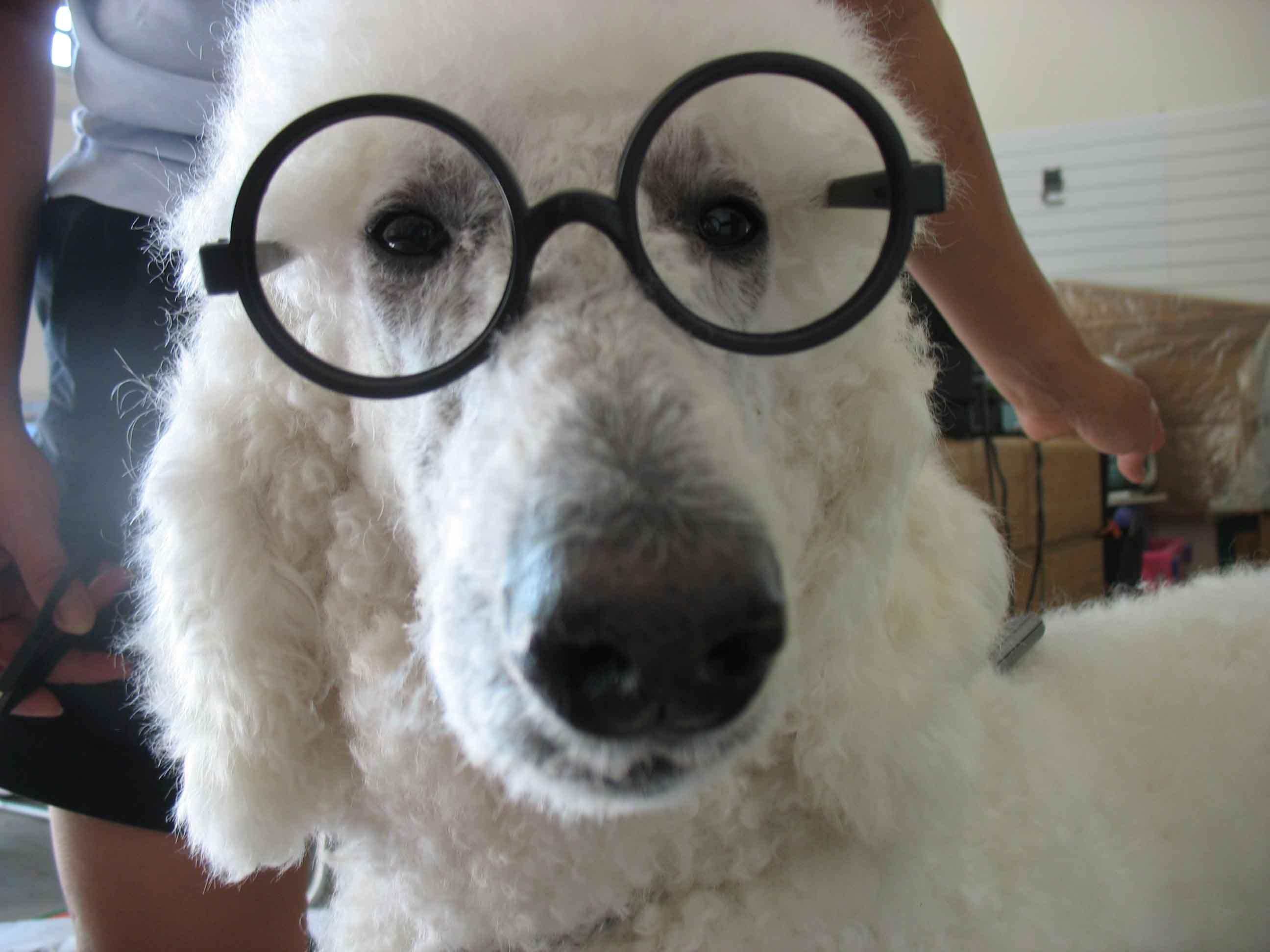 http://www.parrishill.com/sitebuildercontent/sitebuilderpictures/cody_glasses_websize.jpg