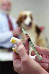 http://www.parrishill.com/sitebuildercontent/sitebuilderpictures/vet_med_dog_s.jpg